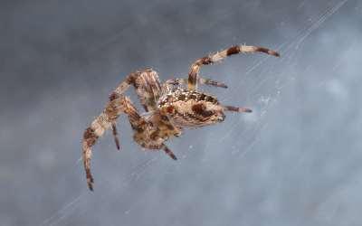 Heisterkamp Producties: Uw spin in het web