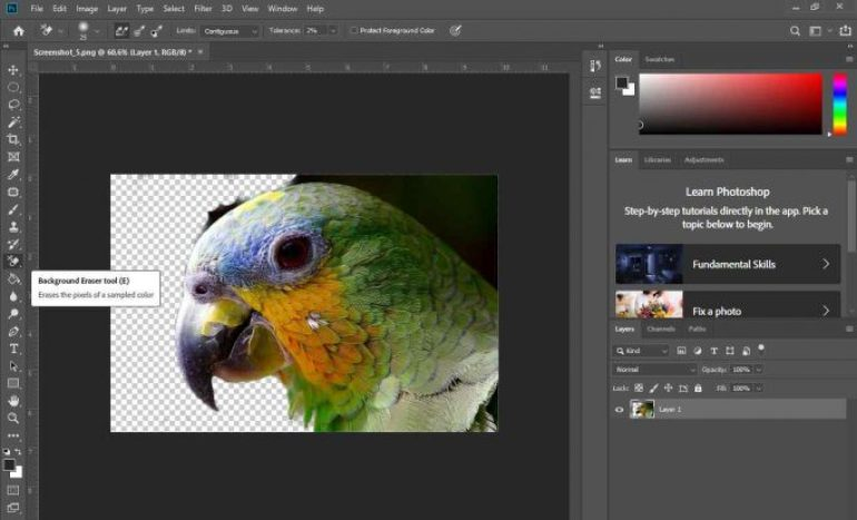 background burung jadi transparan
