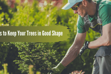 Top 9 Ideas to Keep Your Trees in Good Shape