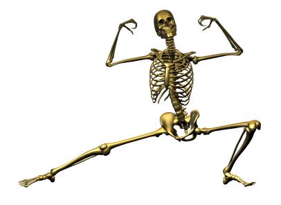 العظام فى جسم الانسان