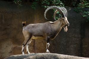 حيوانات منقرضة بالسعودية