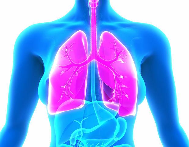Respiración Feldenkrais pulmones