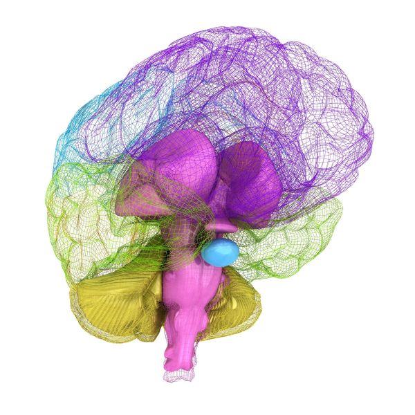 neuromovimiento helena guevara