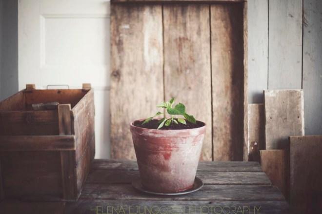plantan