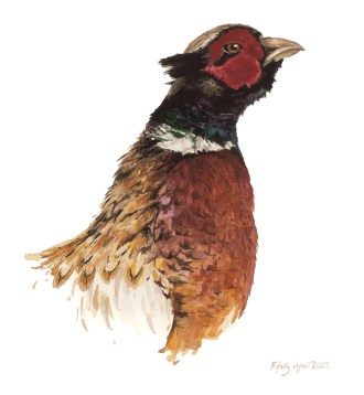 'Brigadier', watercolour.