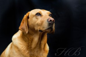 Hector's dog