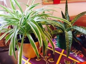 Plantes Montessori