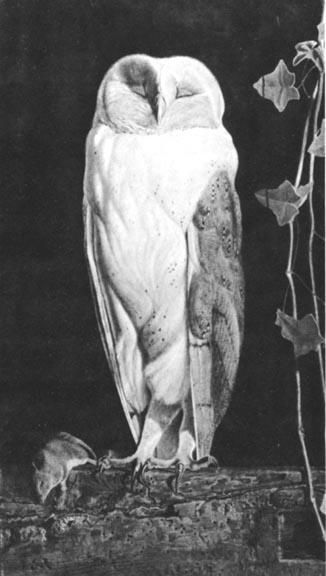 white owl: victorien