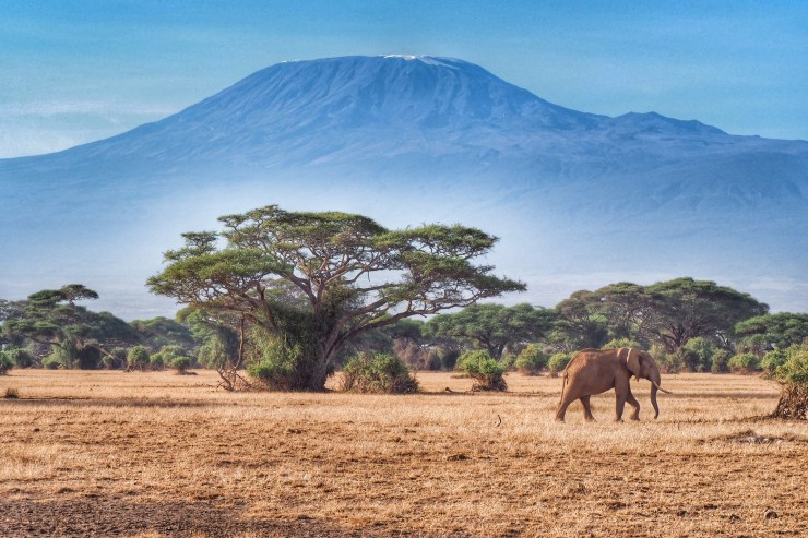 Elephant in front of Kilimanjaro in Amboseli National Park. Kenya and Tanzania Itinerary.