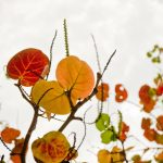 ©KEN SHUNG flora series#11. Color - Close up of autumnal leaves and stems, white background