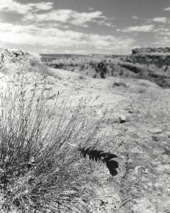 KWIRA (Tarahumara) #162 ©Oskar Landi . Black and white-mountains, black feather