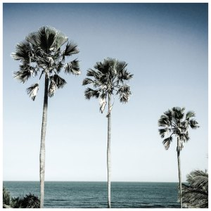 'Three Palm Trees' Gambia © Helen Jones-Florio