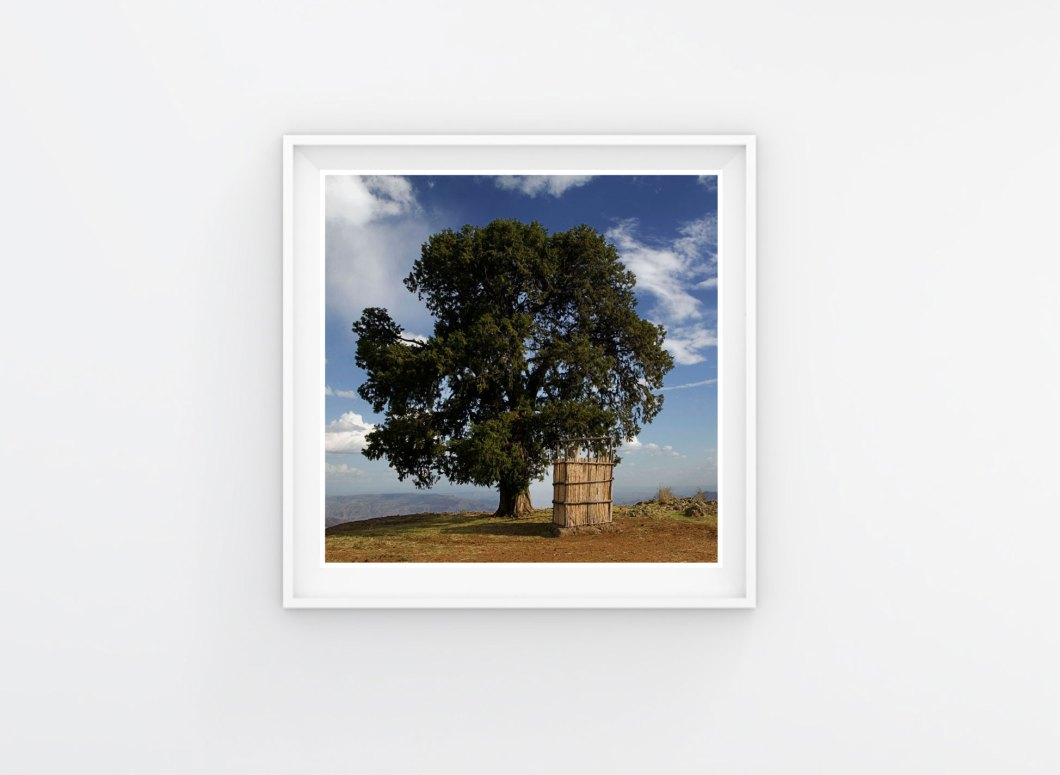 Ethiopia, Tree, Sky ©Jason Florio - framed print of tree on a hilltop