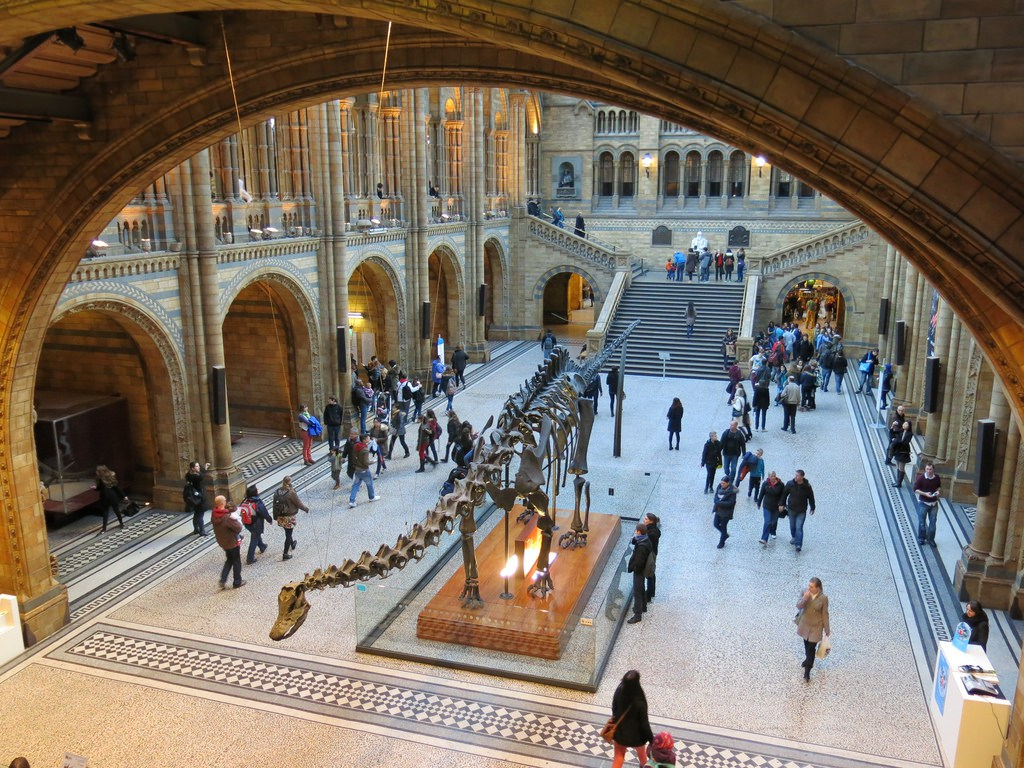 The Central Hall at the Natural History Museum