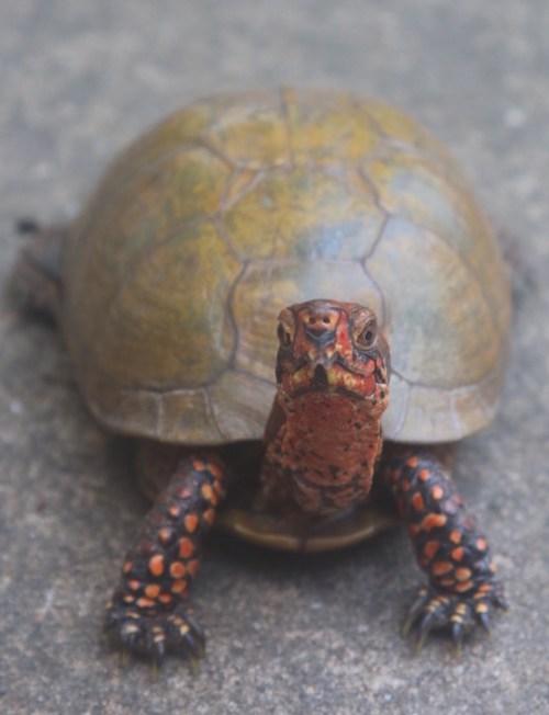 Turtle Cam
