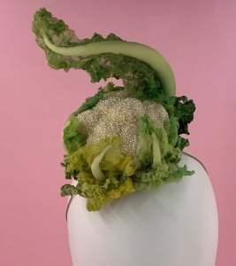 Cauliflower Head @ Met Camp - 2019