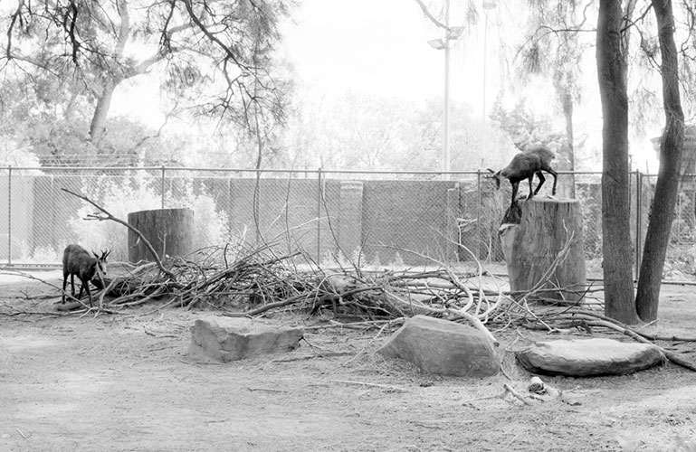 Tale (Zoo) 1998 - Pigment Print, Variable Size
