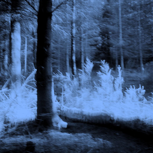 Tale (Forest) 1993 - Pigment Print, Variable Size