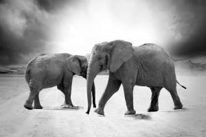Stå stødig lik en elefant.