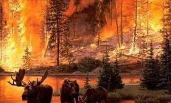 Τι σημαίνουν οι πυρκαγιές στην Αλάσκα για την αλλαγή στο κλίμα του πλανήτη
