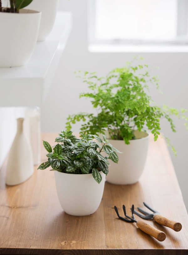inexpensive white pot for plant
