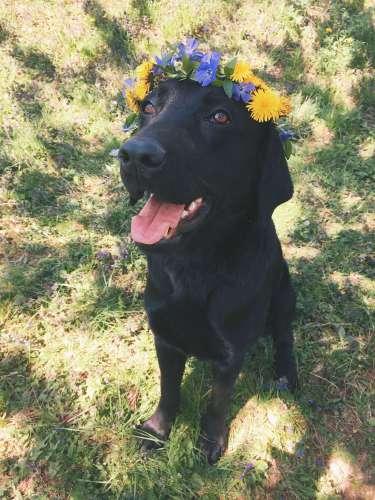 hellolife-blog-dolog-amiket-megtanultam-kutyamtol