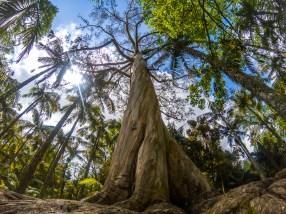 Mächtiger Baum im Terra Nostra Garden