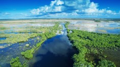 Everglades von oben