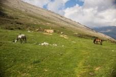 Pferde auf einer Wiese in Albanien