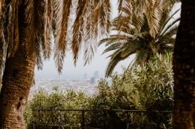 Palmen im Park Guell