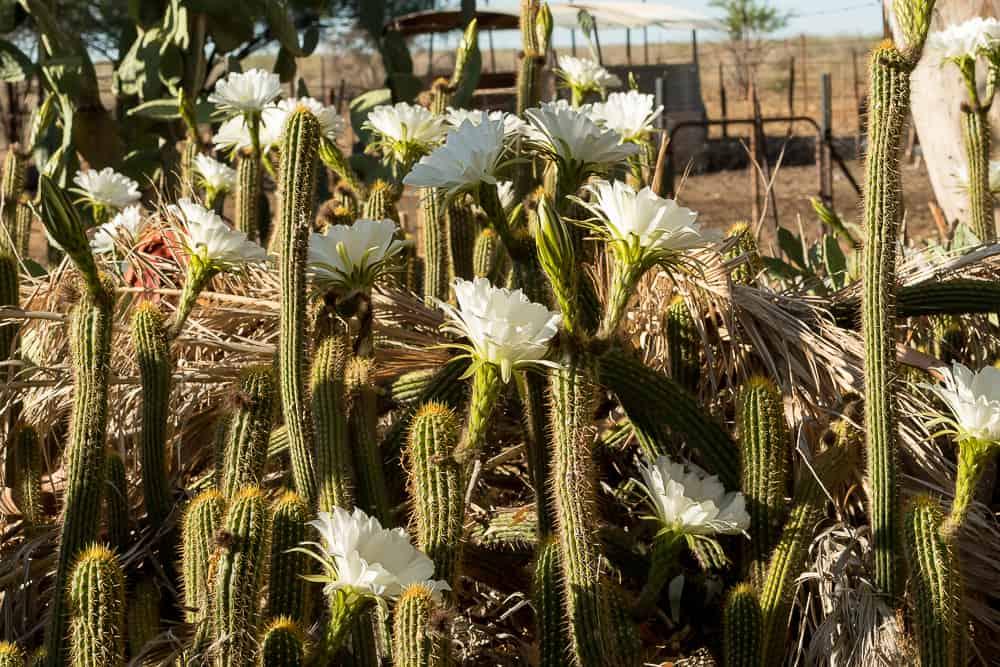 Blütenpracht auf Nutupsdrift