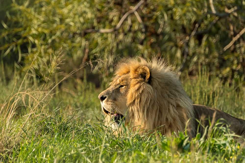 Drakenstein Lion Park in Paarl
