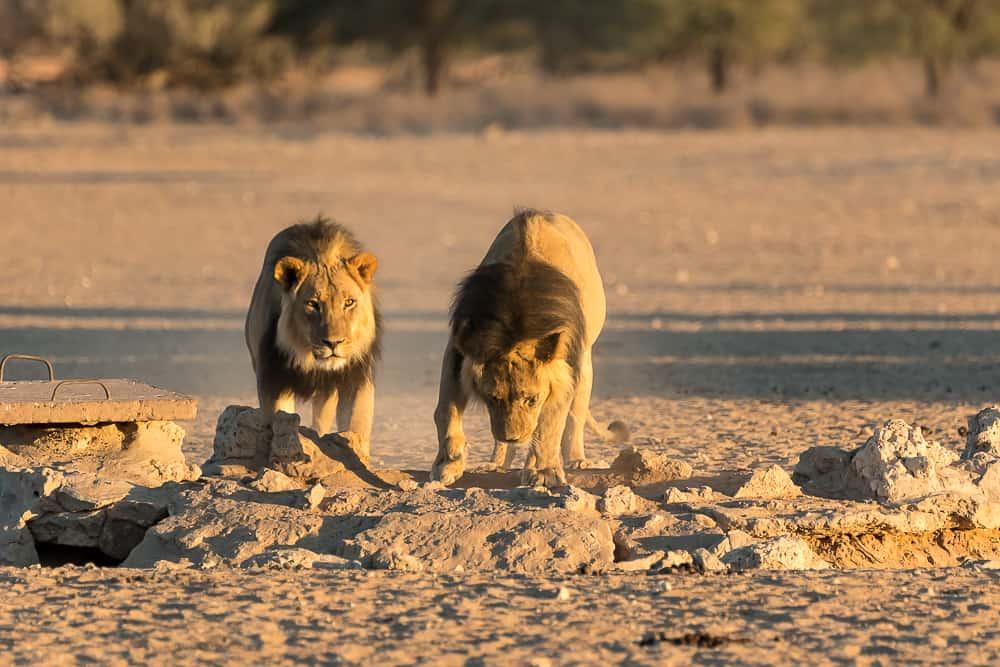 Die Löwenbrüder in bewegten Bildern