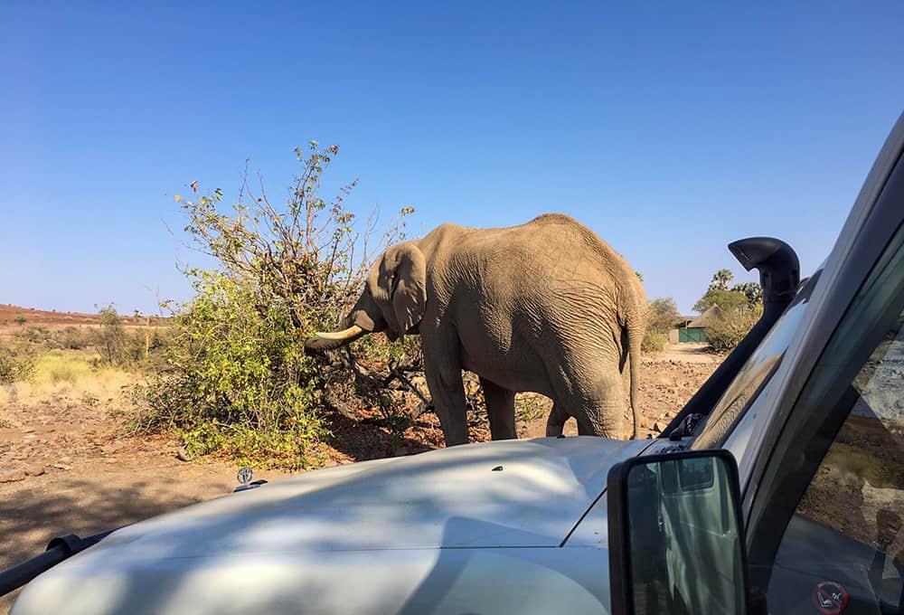 Elefantenbesuch in Palmwag