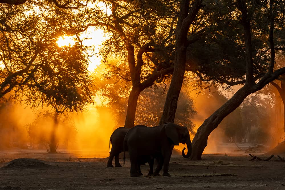 Mana Pools in Zimbabwe