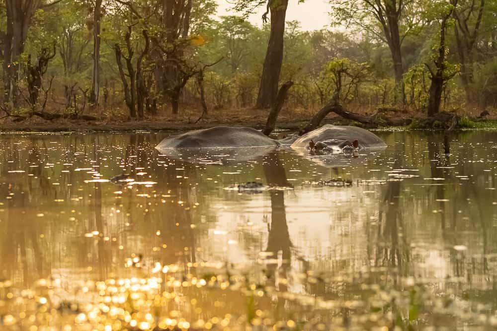 Waterhole @ Wildlife Camp