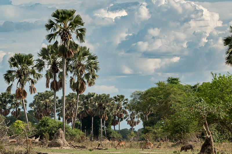 Liwonde Nationalpark