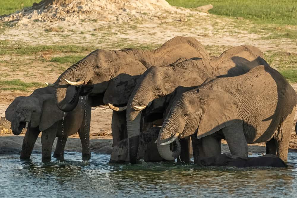 Elefantengruppe im Hwange