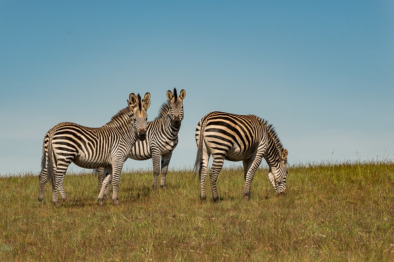 Nyika Nationalpark