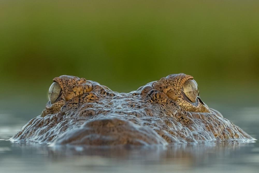 Lagoon Hide @ Zimanga