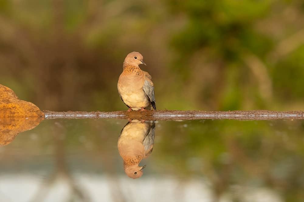Bird-Hide @ Zimanga