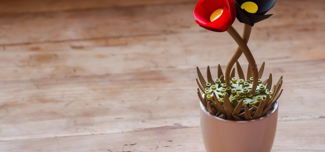 Capes et pétales de fleurs