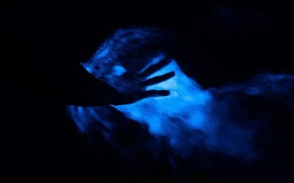 Jamaica Luminious Lagoon Bioluminescence