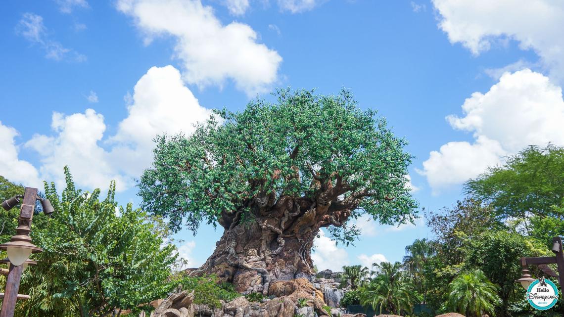 Animal Kingdom - Walt Disney World