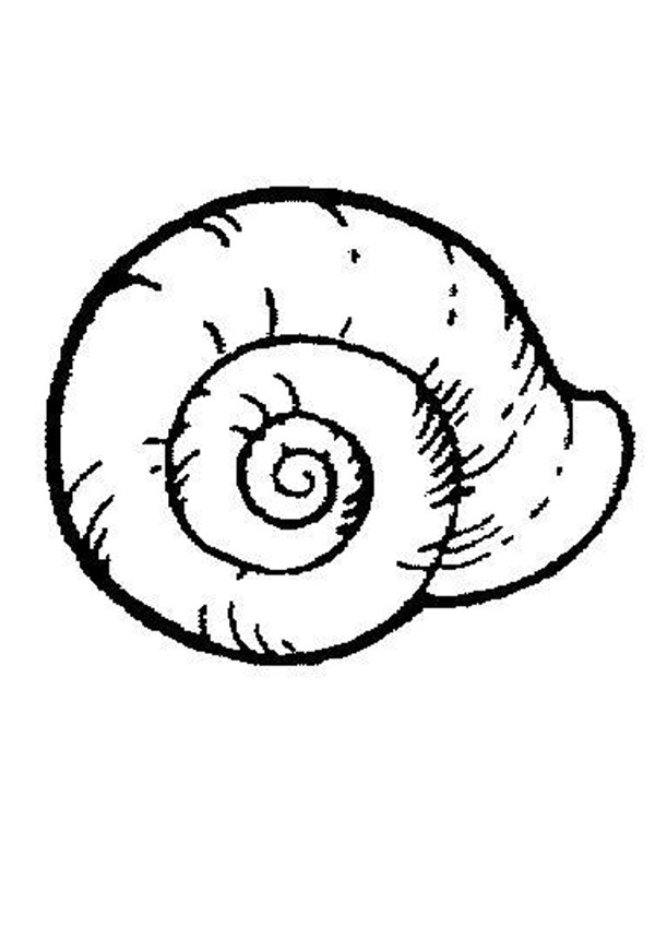 shell coloring pages sea shell