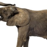 elephant in the room are you ignoring your story revision instincts