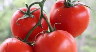 fresh vs frozen tomato