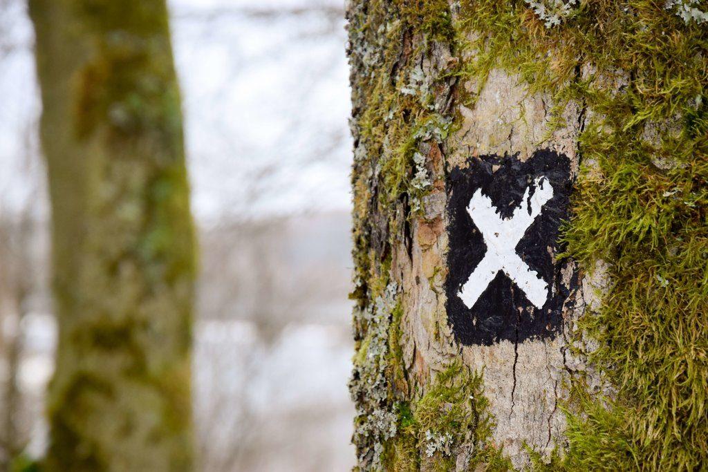 cible-peinte-sur -un-arbre