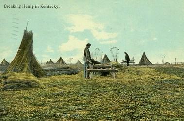Kentucky Hemp Farming History and Future