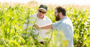 CSU researching industrial hemp